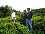 贵州普安茶业高效农业实现转型升级