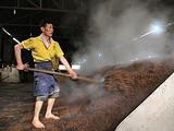 """泸州纳溪区大力发展""""百亿茶产业"""""""