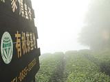 3月10日茶区播报:四川省 蒙顶山