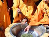 3月23日春茶播报:四川省蒙顶山蒙顶皇茶茶业有限责任公司茶园基地