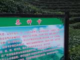 3月30日:江西省遂川县汤湖镇白土村遂兴茶叶茶园