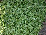 3月30日春茶播报:浙江省杭州市西湖区