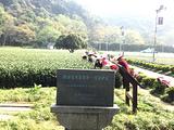 4月1日春茶播报:浙江省杭州市西湖区