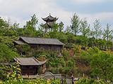 连猪和鸡都吃有机食品的茶人农庄,果树成荫、四季繁花、园林胜景