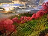 带上茶,踏遍这7个美丽的地方 |最佳茶旅目的地推荐榜