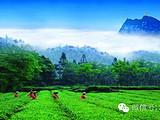 免费征集丨峨眉山茶之旅三天两夜邀你体验,更有峨眉雪芽好礼相送!