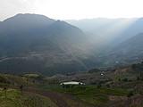 6位志愿者与大咖同行,共同寻访摆尾箐古茶树胜地
