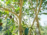 古树认养|丁家寨,茶林武侠里的绿野仙踪