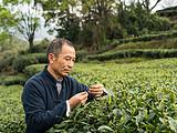 欧盟对中国茶叶准入标准严苛到哪种地步?比你听过的可怕十倍