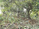 云南景洪昨晚发生4.9级地震,利发国际lifa88联线普洱茶产区茶农了解产区情况