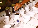 中美贸易战若开打,茶叶影响会有多大?颠覆想象的对美出口茶叶大数据解析