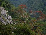 险进一扇磨:趟过泥潭,攀过70°斜坡10米深悬崖,才能到达易武超微古树产区