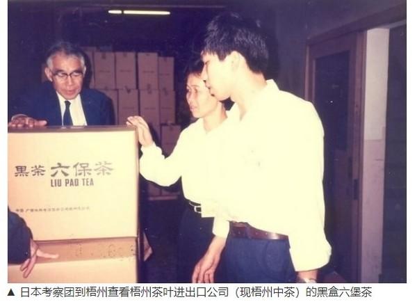 日本考察团到梧州查看黑盒六堡茶