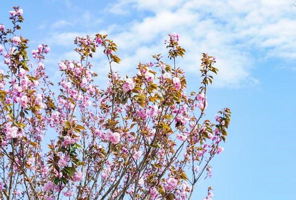 300亩桃花园