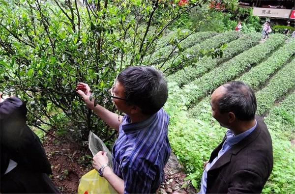 武夷山地方科研部门与福建农林大学专家共同组成的团队进行科研活动