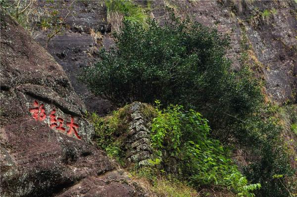 武夷山风景区内的母树大红袍