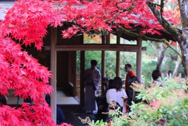 由于历史的原因,日本茶道在西雅图的传播和影响也较为深远。