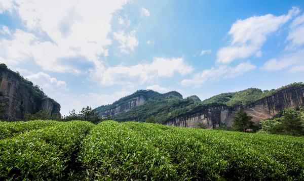 茶语网发起武夷岩茶主题文章征集令,最高奖励:1000元/篇+传承者18位非遗大师徒弟比赛茶一套