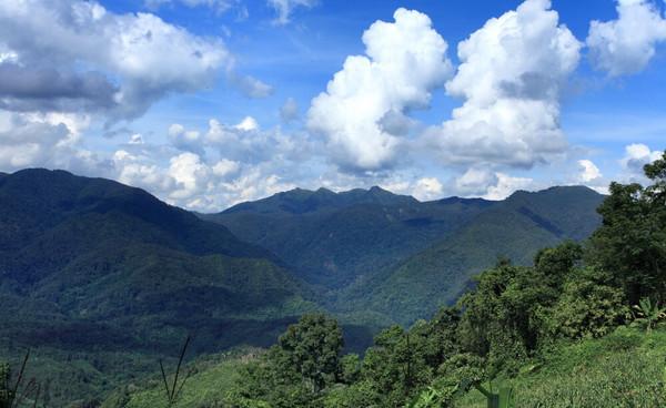 薄荷塘在云南西双版纳勐腊县易武茶区深处的大山里,是一块连摩托车都无法到达的茶地