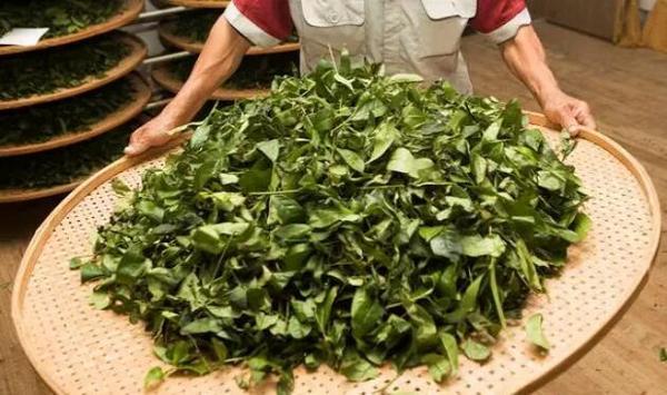 武夷岩茶,制作技术独一无二,为全世界最先进的技术,无以伦比,值得中国人民雄视世界。