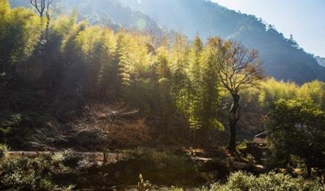 武夷山桐木关自然保护区