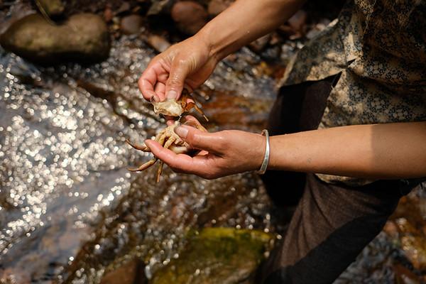 捕获的河蟹