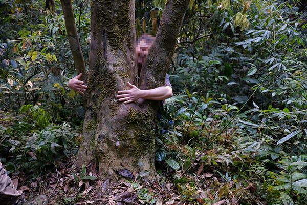 茶树须根少,主根明显,树干粗壮,有些甚至一个成人都无法环绕住。