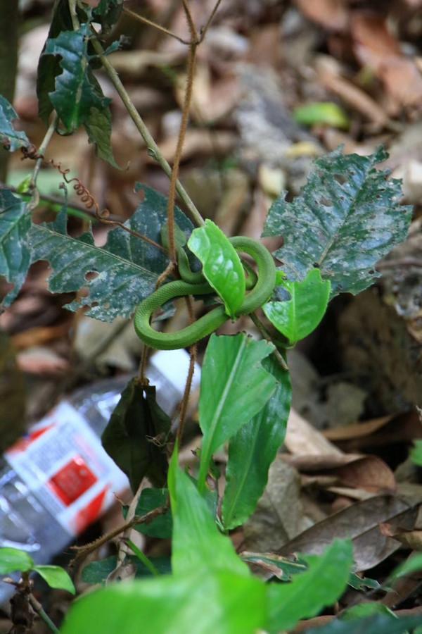 昆明季海先生提供现场拍摄毒蛇图片