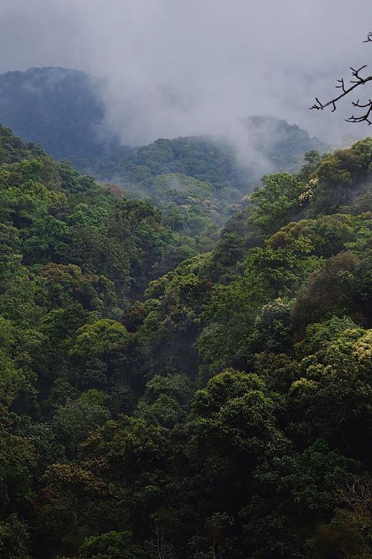 去过再多的茶山,都未曾遇到能与这里相比的地方。在这里,必须要有一颗十足爱茶的心,才能抵御这漫漫寻茶路……