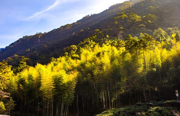 这30棵红茶王老树,位于武夷山市桐木村麻粟自然村麻粟岭四方块,海拔约1392米,属于麻粟具有典型特征的茶山。