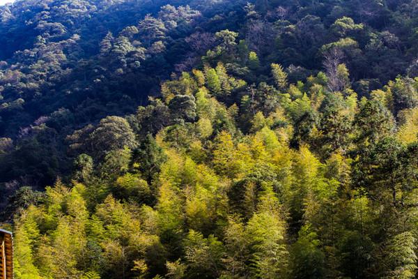 这里的高海拔、气候、温度湿度以及充沛的雨量都是使这些茶树能够在这里生长的重要因素。