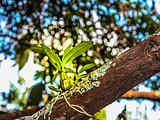为保护这片天赐贡茶地,这里手工除草,不能捕鸟,甚至连蚂蚁窝都不能捅!