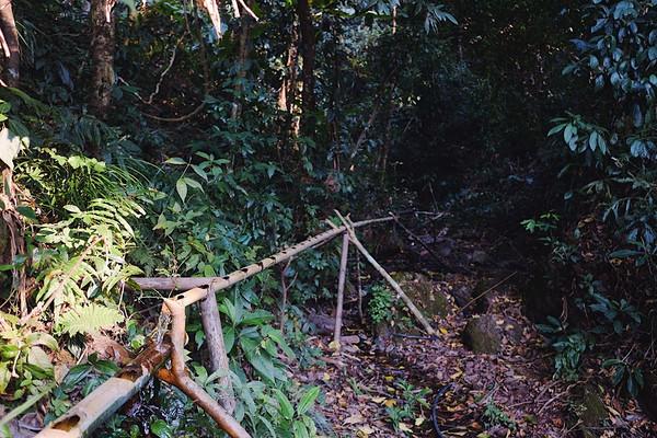 正因此该土壤的特殊状态,对周遭的生态环境要求极高