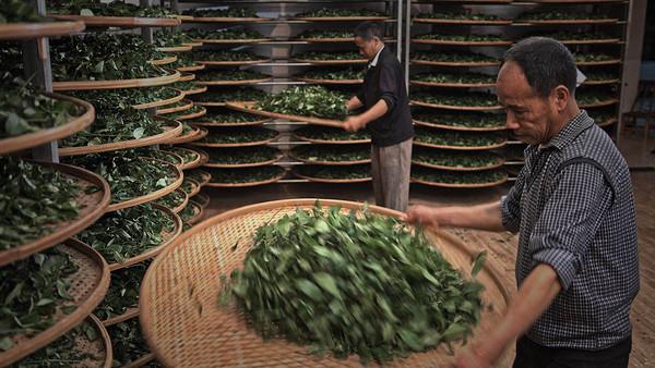 """在他们看来,武夷岩茶的宣传和推广重点不应该只停留在""""斗茶""""上,面对新的社会环境和舆论环境,需要传播方式的创新。"""