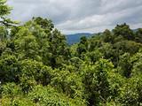 茶之旅丨从勐海到临沧——跟着中吉号茶山行
