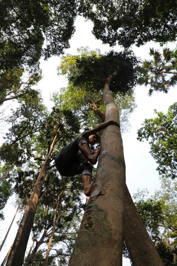 高杆古树标准:两个维度,一高度,二树围