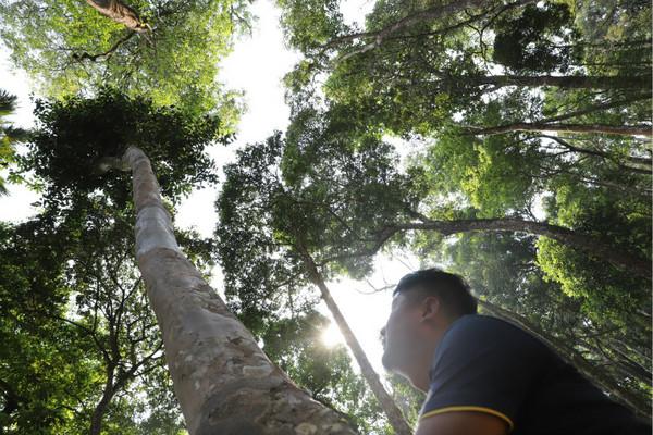 2014年,高杆古树概念由小马哥提出,并首次进入大众视野。