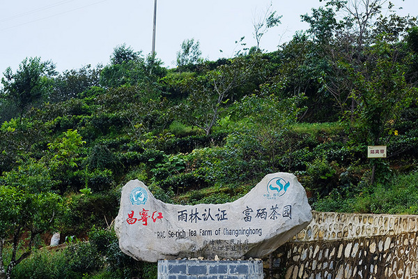 图为雨林认证茶园的入口标识。