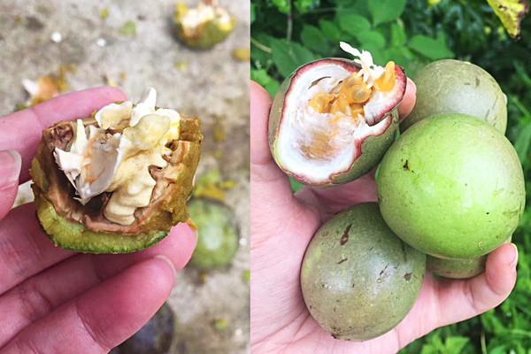 泡核桃和百香果,外壳何其相似,砸开之后,内里乾坤大不相同。