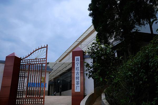 昌宁红古树茶厂