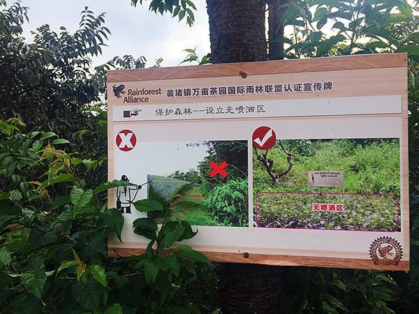 """茶园里到处都有""""雨林规范""""的标识。"""