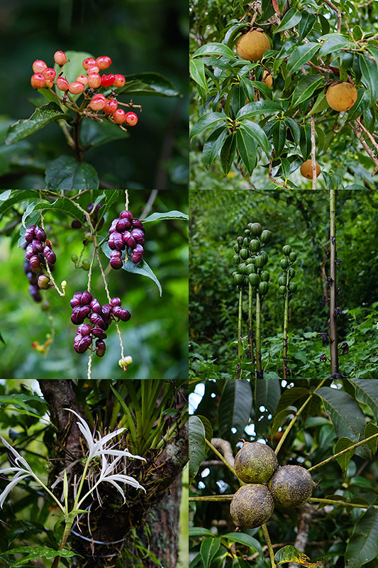 茶树周围的共生植物层出不穷,辨识植物便也成了我们枯燥行走路上的小趣味。