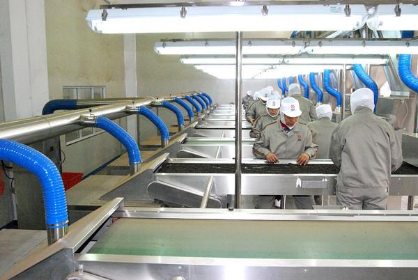 茶叶生产车间