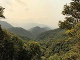 寻找普洱茶秘境  易武国有林的追逐战