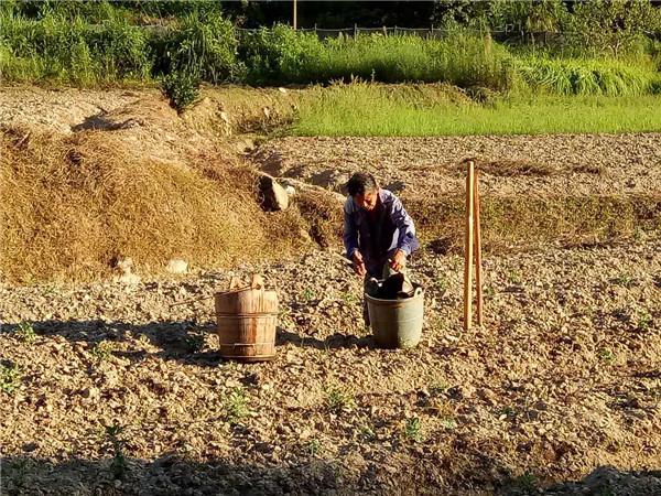 微酸性土壤