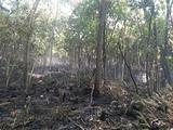 防火之责重于泰山:那些令人扼腕的茶界火灾!