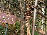 在茶山,集齐一部宫斗剧的所有角色:盘点5年来卖出天价的茶王/茶后/茶太上皇!