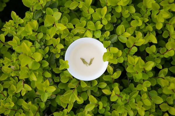 绿茶,茶汤