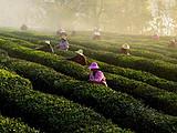 茶转载丨官方亲测,优选好茶:4月5-6日,全国17位县市长,组团替茶农直播卖茶!