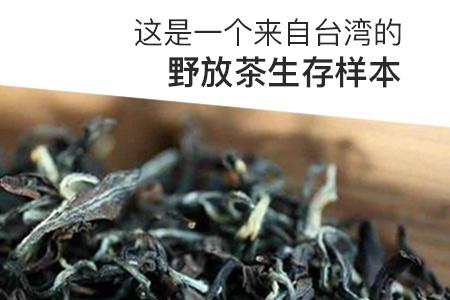 这是一个来自台湾的野放茶生存样本
